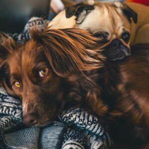 De Beste Hondenkussens 2021